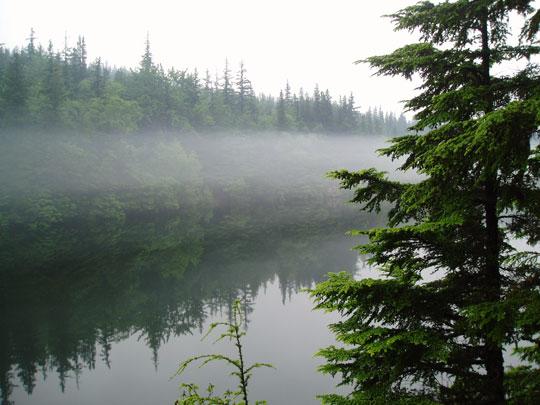 Evergreen_Fog.jpg