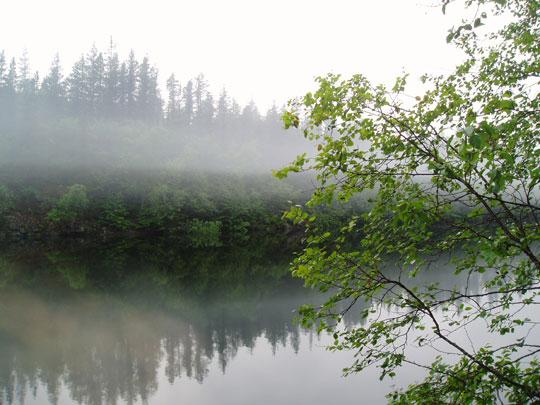 Fog_Tree_Lake.jpg