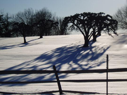 TreeShadow_winter.jpg